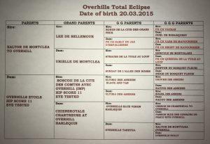 B Overhills Total Eclipse - Clipper - Top Winning Beauc 2017